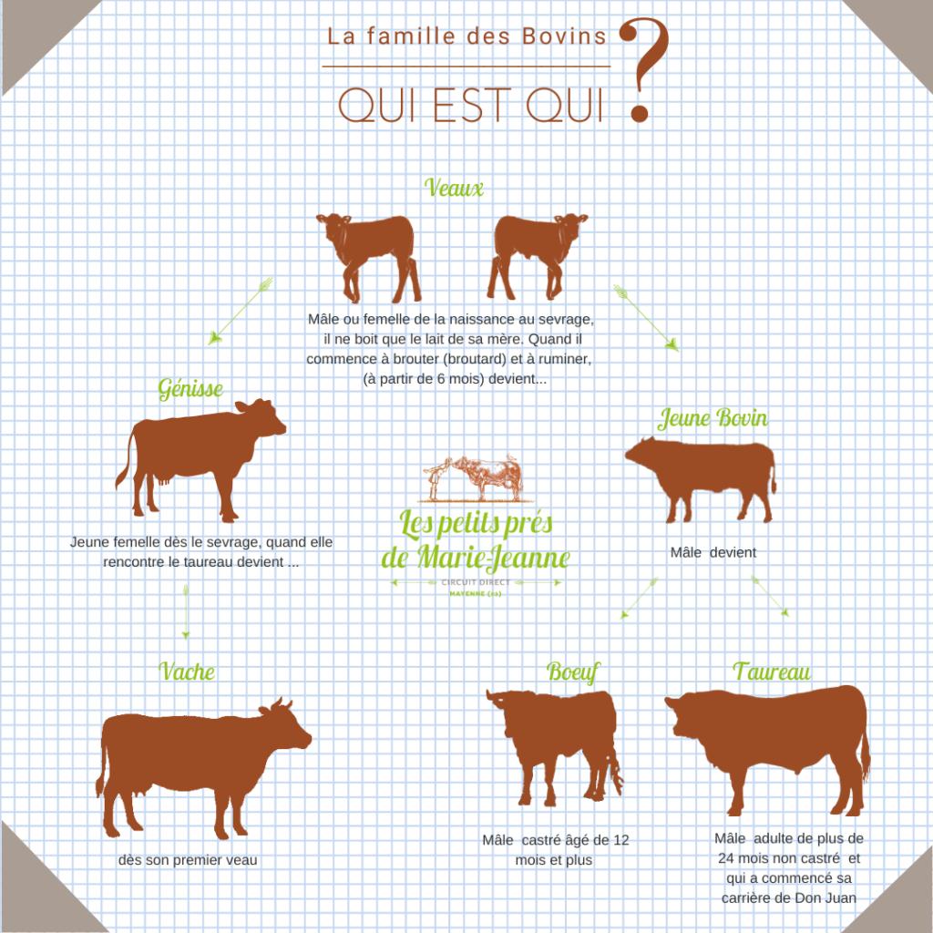 Qui est qui dansla famille des bovins ?
